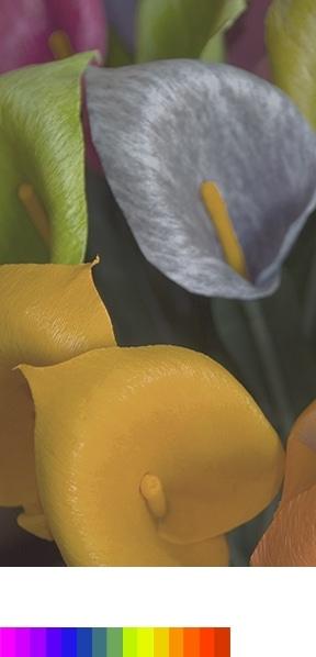 Demonstration von PurColor anhand eines hellen und klaren Blumenbildes mit grossem Farbspektrum