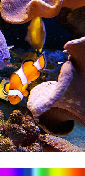a Quantum dot colour display shows wider color spectrum bar and good and clear of fish images