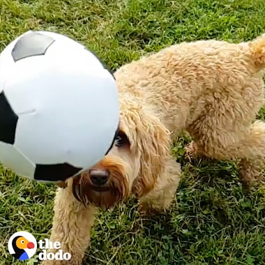 A Super Slow-mo video from The Dodo shot on Galaxy for World Cup 2018. It shows dogs playing with different soccer balls, running and jumping, shot from a variety of angles and using different effects including swing.