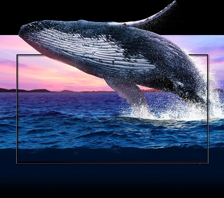 Image of a whale of coming out of a TV