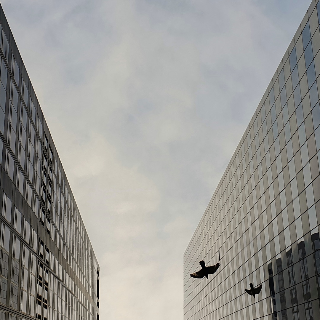A photo taken by Galaxy Note9 looking skywards between two glass buildings, shown at an extreme angle, with a bird flying by