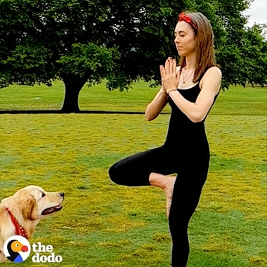 A Super Slow-mo video from The Dodo shot on Galaxy of a woman doing yoga and a dog jumping on her. The swing effect is used when the dog jumps.