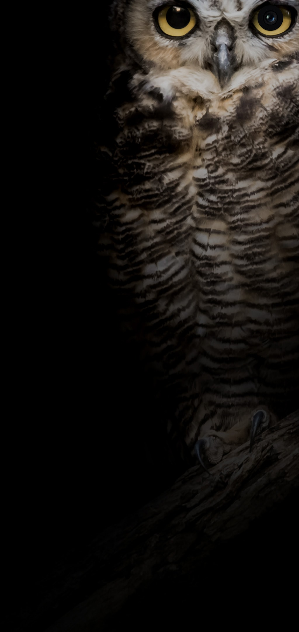 galaxys10wallpaper owl