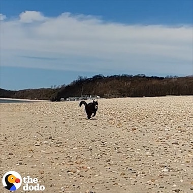 A Super Slow-mo video from The Dodo shot on Galaxy of an adventure cat that is running on the beach and swimming in the water.
