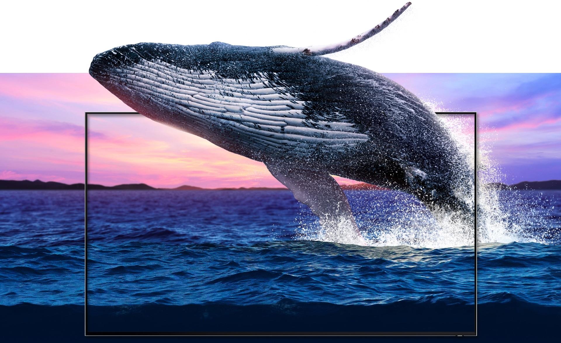 Un vibrante paisaje marino yuxtapuesto con un nuevo juego de marco de televisor QLED en el medio, a través del cual una gran ballena jorobada salta a medida que emerge del océano. Las olas y los detalles de la ballena se muestran en un detalle equivalente al de la vida real.