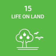 Representative image of SDG life on land