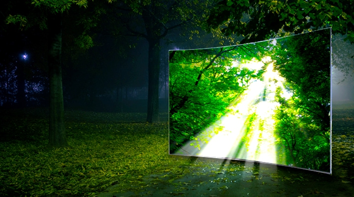 Samsung LEDs a bright and slim tv showing natural colors of forest