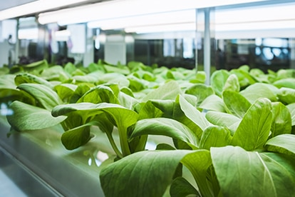 Samsung LEDs full spectrum horticulture lighting allows increased crop output and quality, revolutionizing agriculture