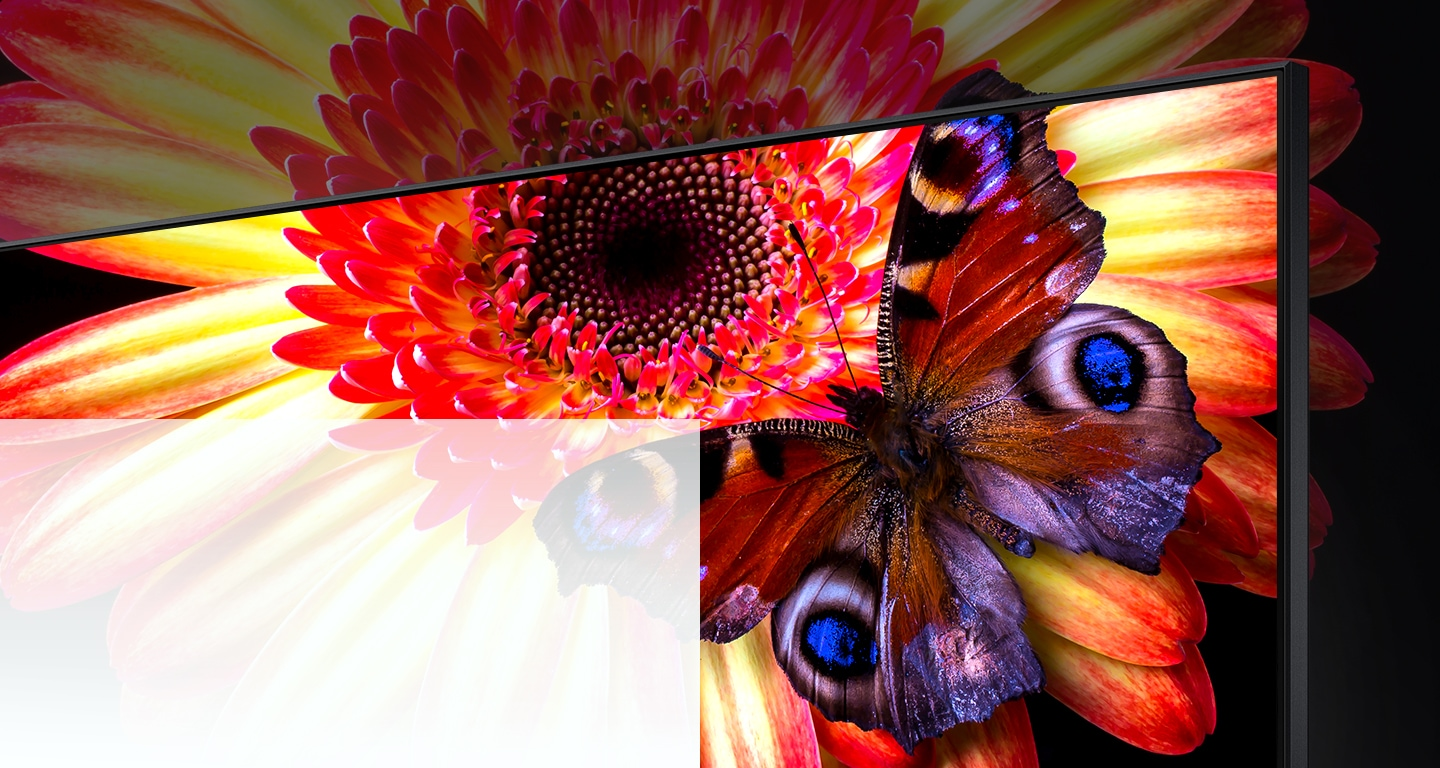 An 8K TV displaying a zoom-in of a pink and yellow daisy with a blue spotted butterfly on its petals. The flower and parts of the butterfly continue off screen to show what cannot be seen on the TV.