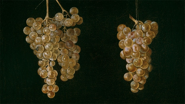Miguel de Pret (Attributed to) Two Bunches of Grapes with a Fly. Detail (1630-1644)