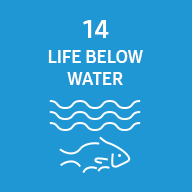 Representative image of SDG life below water