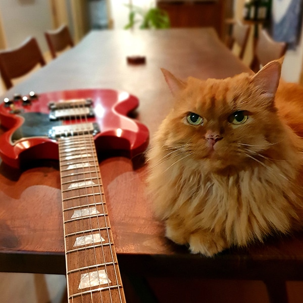 Orange cat sitting on a dining table, next to a red electronical guitar