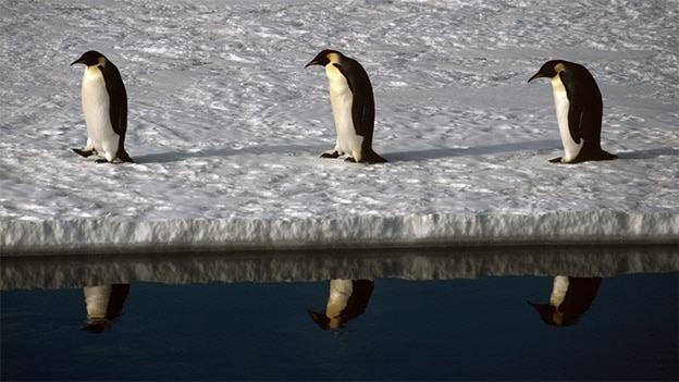 Stuart Franklin Penguins, Antartica (1990)