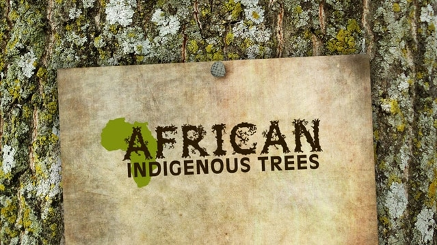 African Indigenous Trees