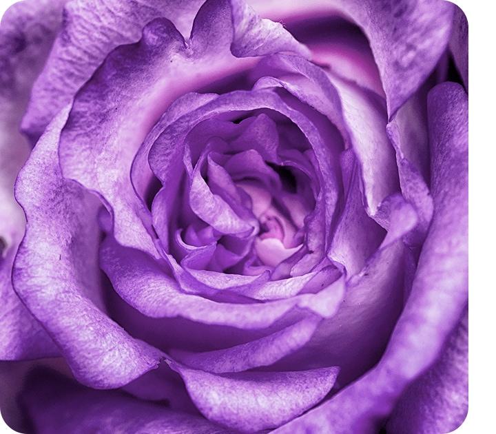 Un primer plano tomado con la cámara macro que muestra los detalles y las capas de una flor violeta.