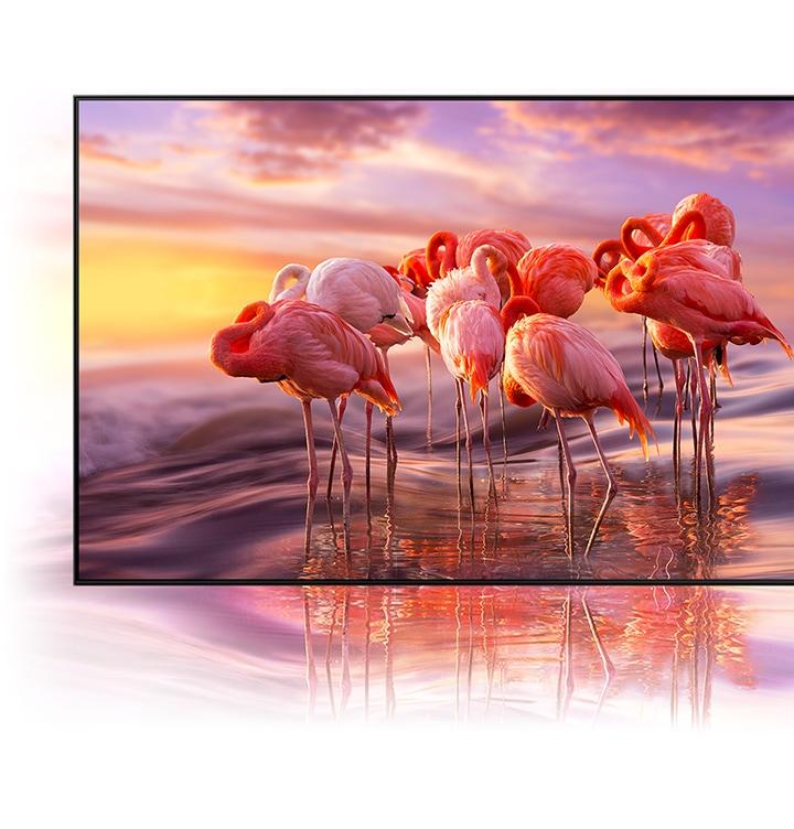 QLED TV zobrazuje složitě barevný obraz plameňáků, aby demonstroval brilantnost barevného stínování technologie Quantum Dot.