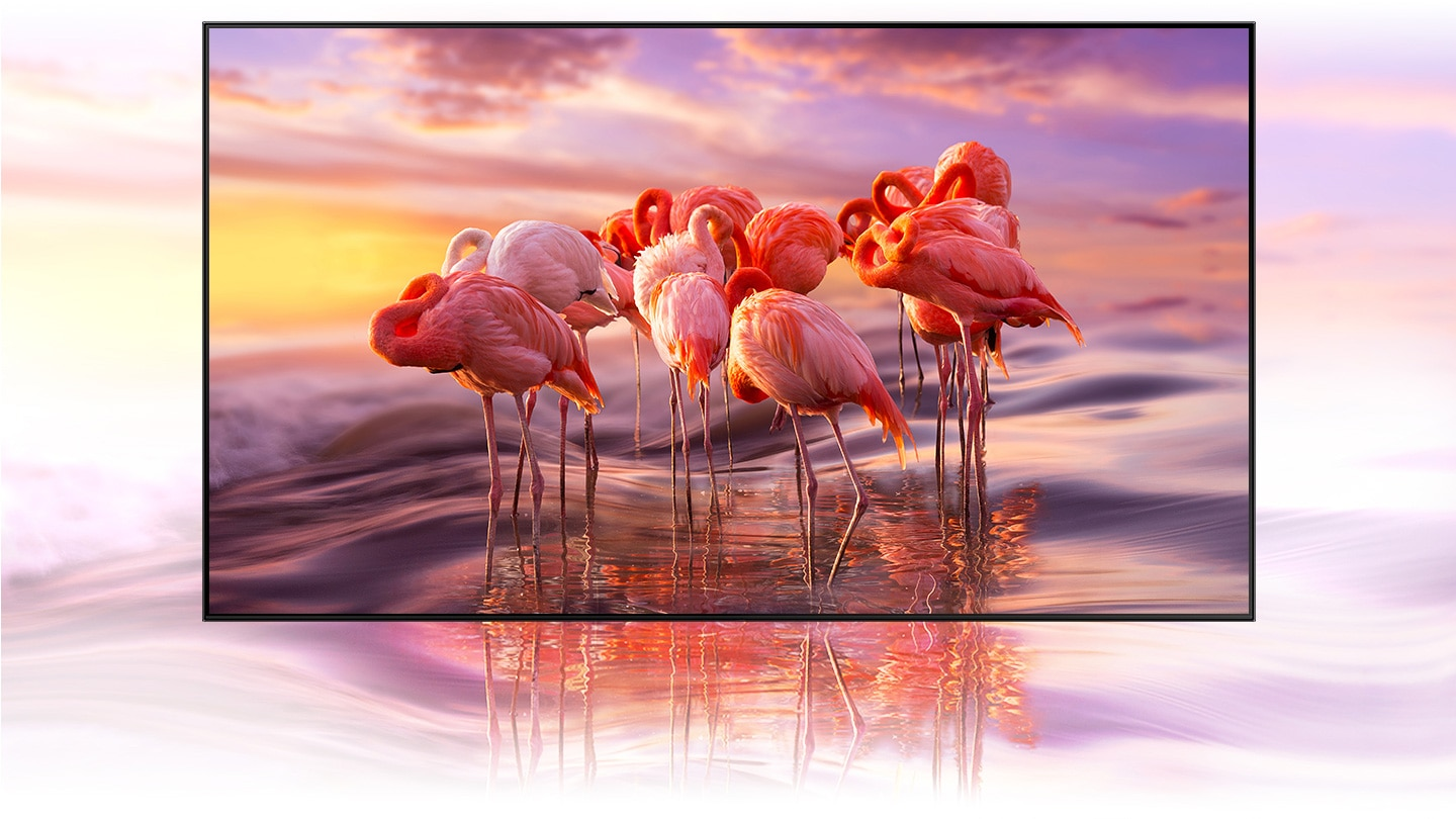 The QLED TV displays an intricately colored flamingo image to demonstrate the brilliance of Quantum Dot technology's color shading.