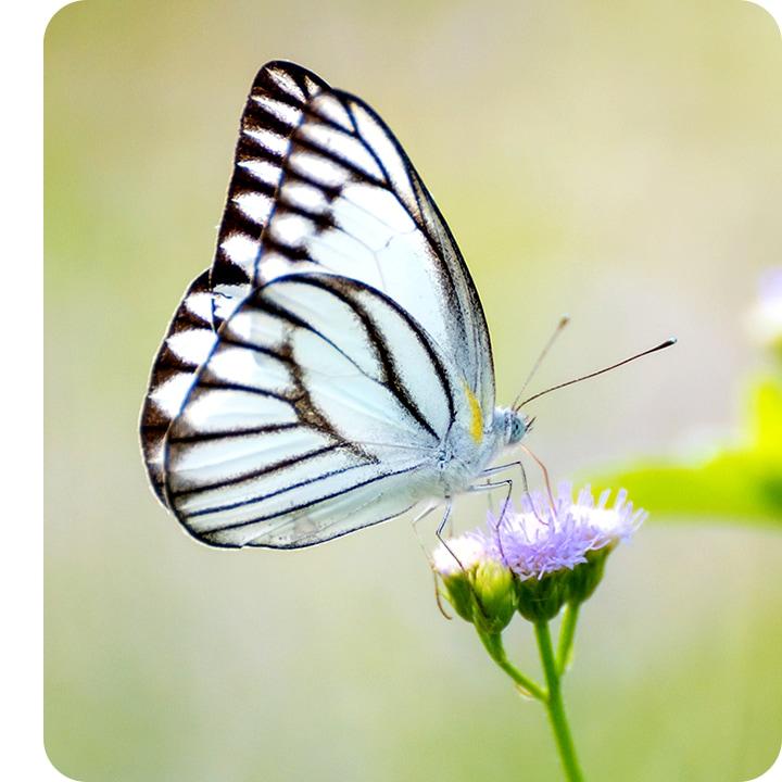 Un primer plano tomado con la Cámara Macro, mostrando los detalles de una mariposa sentada en una flor