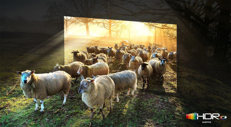 يخرج العديد من الأغنام في الحقول الواسعة المشمسة من داخل إطار التلفزيون. يعرض تلفزيون QLED تمثيلًا دقيقًا للألوان الساطعة والداكنة من خلال التقاط التفاصيل الصغيرة