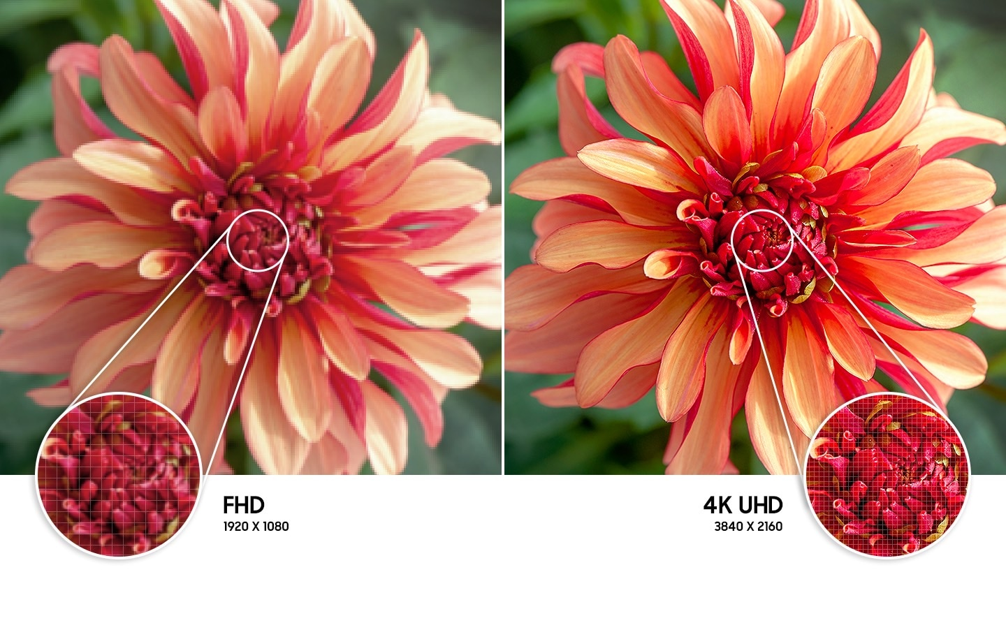 The flower image on the right compared to the left shows higher quality picture resolution created by 4K UHD technology.