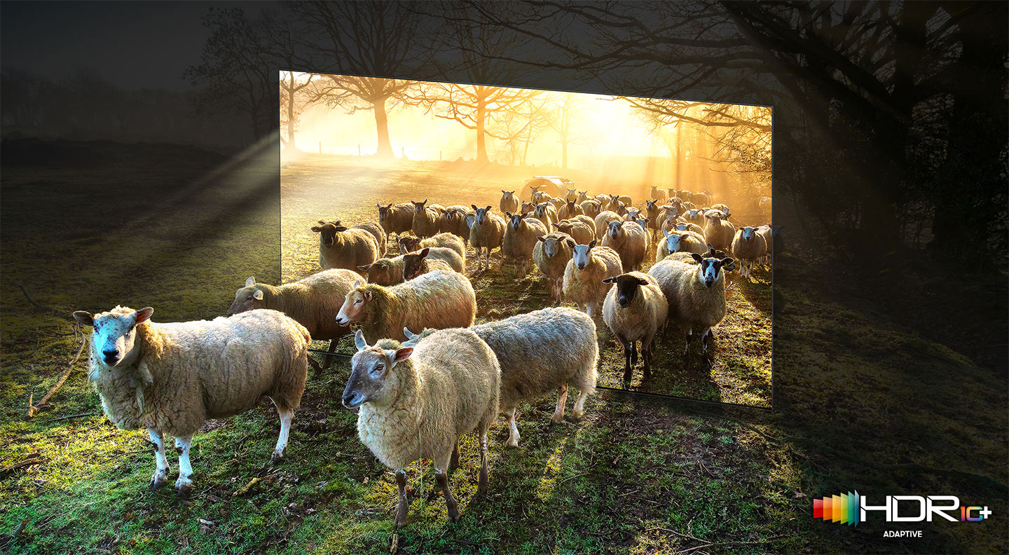 Many sheep in the wide sunny fields are walking out from inside the TV frame. QLED TV shows accurate representation of bright and dark colors by catching small details
