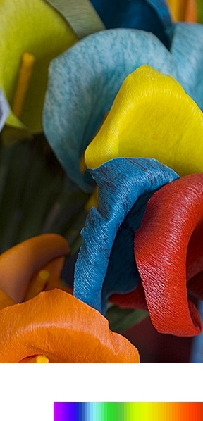 Wider colour spectrum bar and bright and clear flower image explains purcolour
