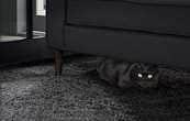 검정카페트에 있는 검정쇼파 아래 검정색 고양이가 숨어 있는 모습이 보여집니다